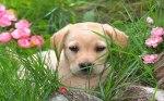 adorableawp6_400x250